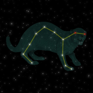 Constellation of the Mongoose