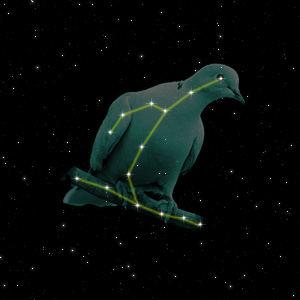 Constellation of the Dove